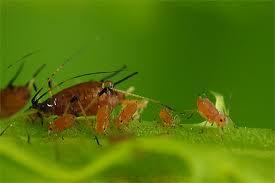 Te koop Biologische gewasbescherming