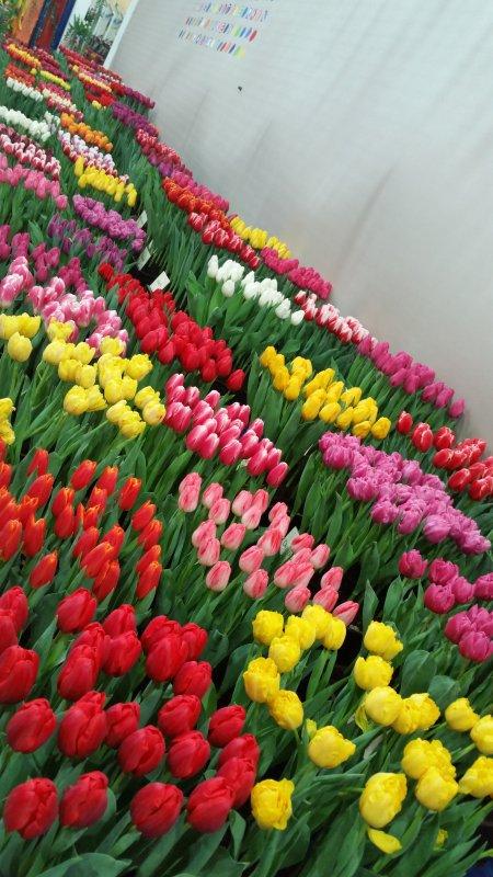 Te koop Perkplanten, zaden, bloombollen, boomen, struiken