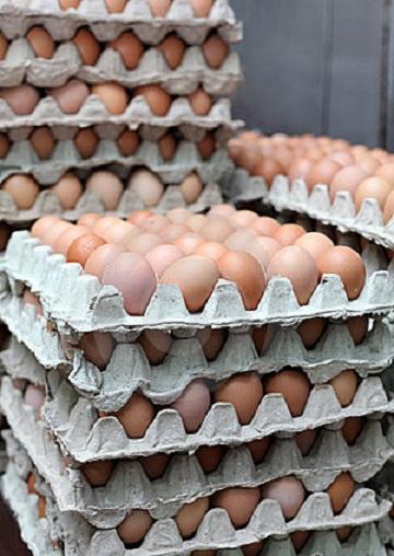 Te koop Fresh Chicken Eggs