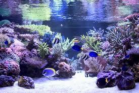Te koop Terraria en Aquaria