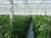 Te koop Greenhouse constructions > glass