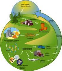 Bio-energie