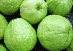 Best Quality Fresh Guava
