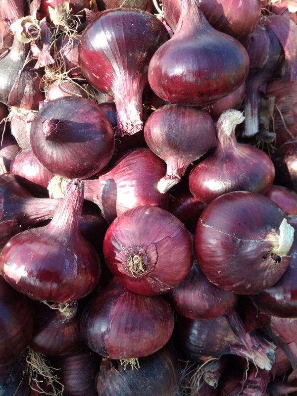 fresh_red_onions